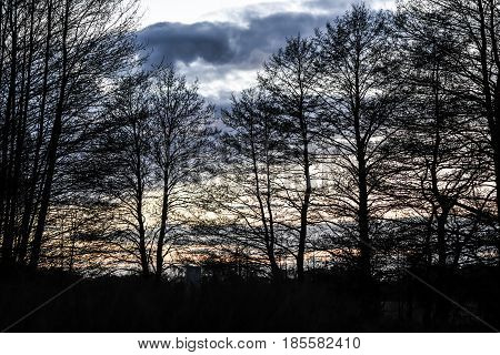 Landscape of trees by the sunset, summer time, Poland