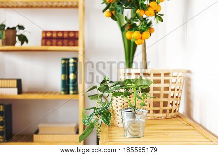 Room with wood bookcase and decorative orange tree