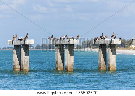 pelican sitting on concrete columns in sunny day, Flortida