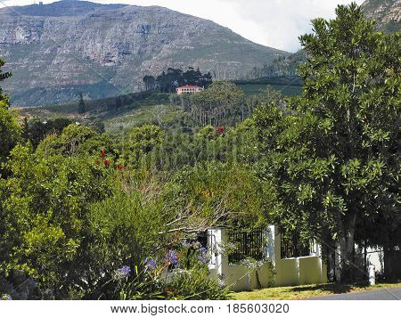 CONSTANTIA, CAPE TOWN, SOUTH AFRICA, WITH TREES AND OTHER VEGETATION IN THE FORE GROUND AND A MOUNTAIN IN THE BACK GROUND