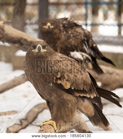 hawk in the park outdoors . Photo in nature