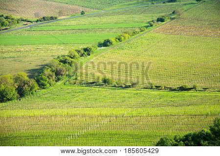 View of a vineyard in the Palava region of South Moravia on a sunny spring day