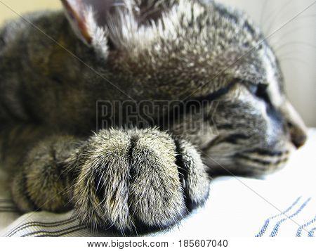 Gato com sono, quase dormindo na caminha