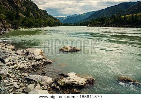 Turquoise raging Katun. Milk river. Mountain Altai.