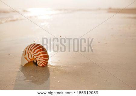 nautilus shell on a sea ocean beach sand with  soft sunset light