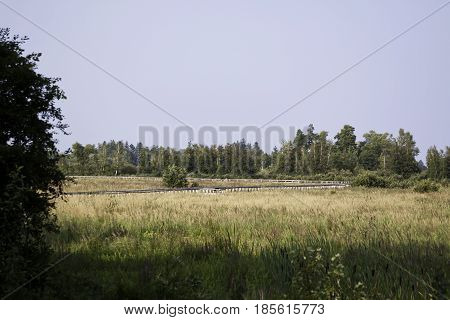Wide view of long wooden walking path in a grassy field with trees and foliage near Cornwall, Ontario on a sunny day in August.