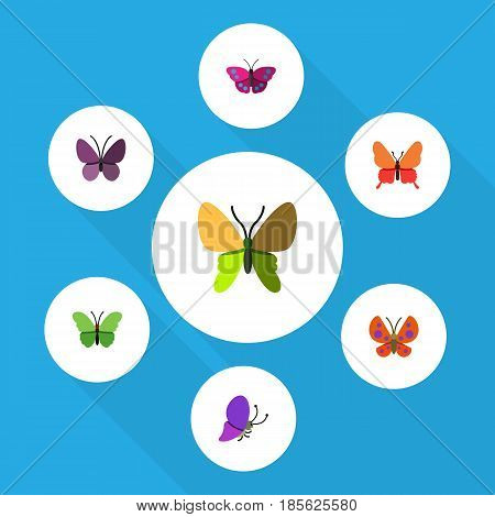 Flat Moth Set Of Summer Insect, Beauty Fly, Archippus And Other Vector Objects. Also Includes Archippus, Milkweed, Insect Elements.