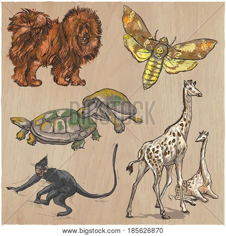 Animals around the World. Collection of an hand drawn vector illustrations. Freehand sketches. Colored line art. Each drawing comprise of a few layers of outlines. Background texture is separated.