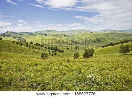 Mountain Altai Landscape. Green Glade