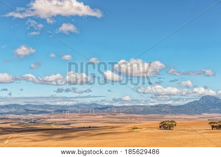 A view from the Middelplaas Road accross farm landscape with a wind-farm in the distance near Caledon in the Western Cape Province of South Africa