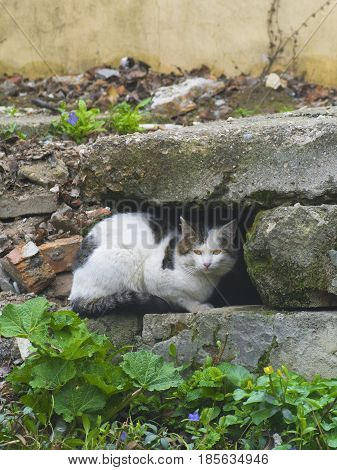 The cunning cat sitting among the stones
