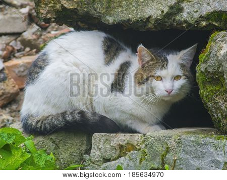 The cunning cat hides among the stones