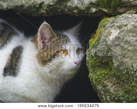 A cunning cat hides among the stones close up