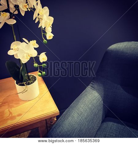 Elegant orchid decorating a room with armchair and wooden table.