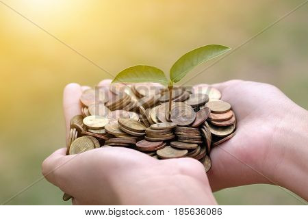 plant growing on coin and hand of the girl. Investment concept. Hand ROI Insurred Idea Market Bank CSR Trust Wealth Day Debt Food Hope Nature Dollar Seed Support Charity Treasure Safety World Cash Grow Future Deposit Save Bonus Preserve.