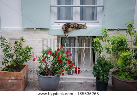 PARIS - FRANCE AUGUST 4, 2015: Resident tabby cat sleeps on the window ledge of a home on Rue Cremieux, in the 12th Arrondissement, one of the prettiest residential streets in the city.