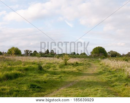 Lush Scene Of Country With A Walking Path Through It In Late Afternoon Of Spring