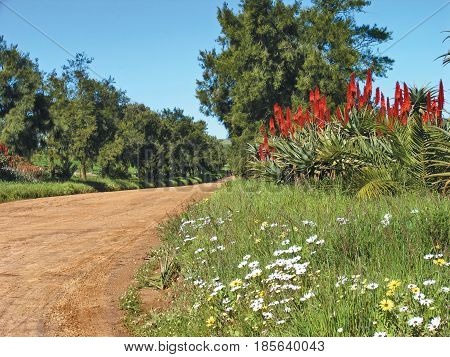 DARLING, CAPE TOWN SOUTH AFRICA, LANDSCAPE, SAND ROAD, GRASS AND FLOWERS  IN FORE GROUND AND TREES IN THE BACK GROUND