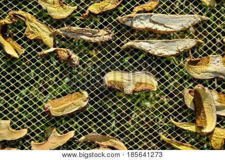 Close Up Of Drying Cut Mushrooms On Net Dryer Background In Garden. Heap Of Natural Dried Sliced Bol