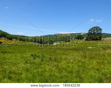 Grassland with brooms and forests at Mont Lozere near Mas de la Barque in the Cevennes mountains France
