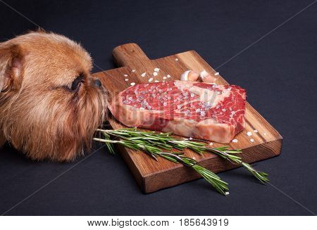 The red hungry dog tries to steal a piece of marble meat from the table. Steak ribeye with spices on a wooden board.