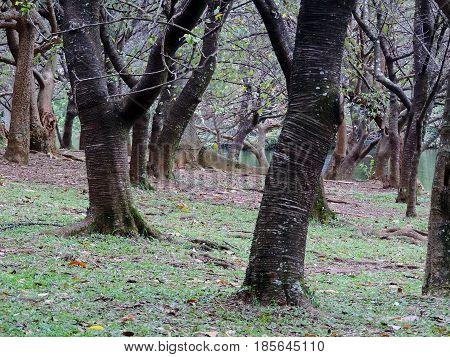 The landscape of a cold autumn grove