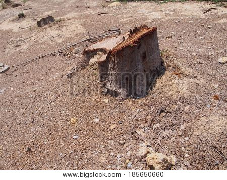 Photo of the stump of the tree
