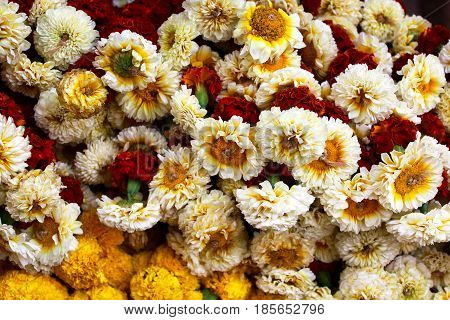 Variety of beautiful marigold flowers, many types