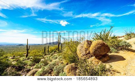Saguaro Cacti and large Rocks in the semidesert landscape of Usery Mountain Regional Park, Arizona with the Valley of the Sun and the city of Phoenix in the background
