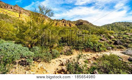 Saguaro, Ocotillo and Barrel Cactuses in the semidesert landscape along the hiking trail to the Windy Cave in the colored geological rock formations of Usery Mountain near Phoenix, Arizona