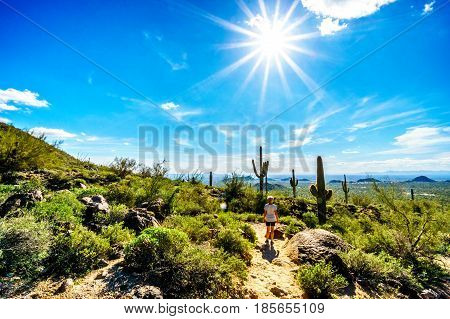 Saguaro Cacti under bright sun rays in the semidesert landscape of Usery Mountain Regional Park, Arizona with the Valley of the Sun and the city of Phoenix in the background