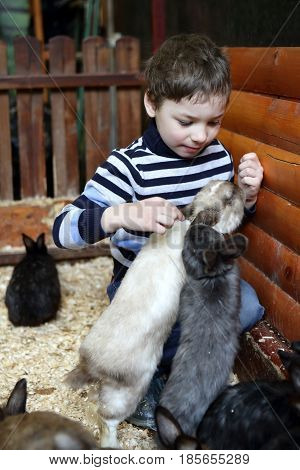 Boy Playing With Rabbits