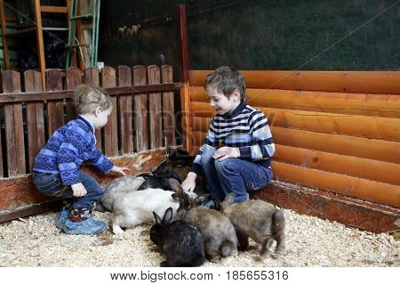 Brothers Playing With Rabbits