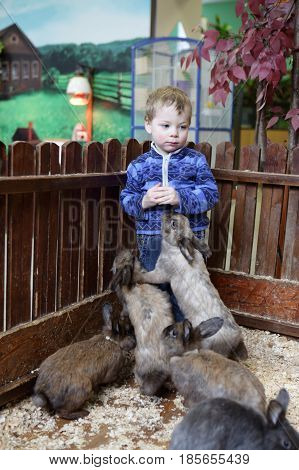 Kid With Rabbits