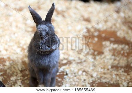 View Of Rabbit