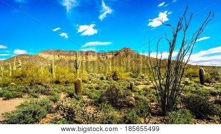 Saguaro, Cholla, Ocotillo and Barrel Cacti in the semi-desert landscape of Usery Mountain Regional Park near Phoenix, in Maricopa County, Arizona with the Usery Mountain in the background