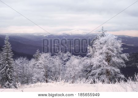 Winter landscape at the great Arber in Bavaria