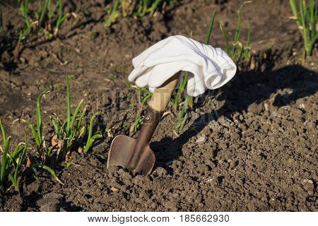 Concept Of Planting: Spade In The Hand, Transplanting Of Onions