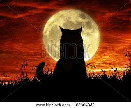 The strong cat is sitting by moonlight.