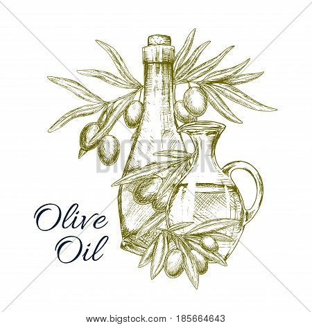 Olive oil product vector poster. Sketch design of of Italian olives and extra virgin oil in bottle and jar or pitcher for natural organic cuisine and healthy vegetarian cooking