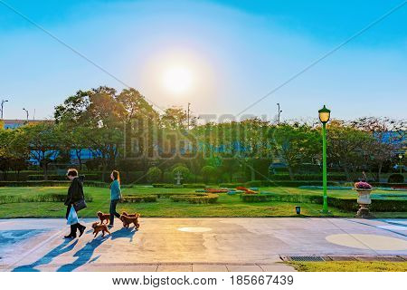 TAIPEI TAIWAN - APRIL 03: Romantic sunset of people walking with group of small dogs in Taipei Expo park which is popular public park on April 03 2017 in Taipei