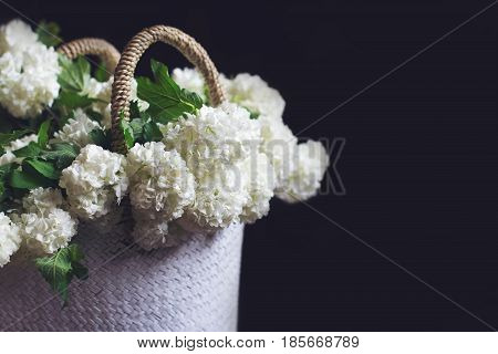 side view closeup of wicker bag with knitted handles full of white snowball flowers on dark black background in natural light copyspace on the right