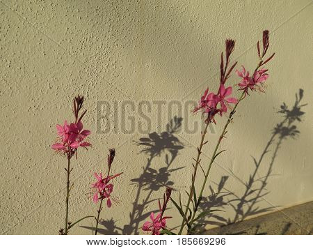 Spindly Red Flowers