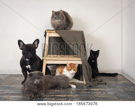 lot of cats and a dog in a pet hotel