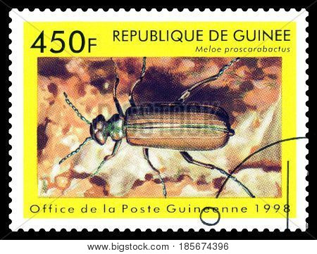 STAVROPOL RUSSIA - April 30 2017: a stamp printed in Guinea (Republique de Guinee) shows Beetle Meloe proscarabactus series beetle circa 1998