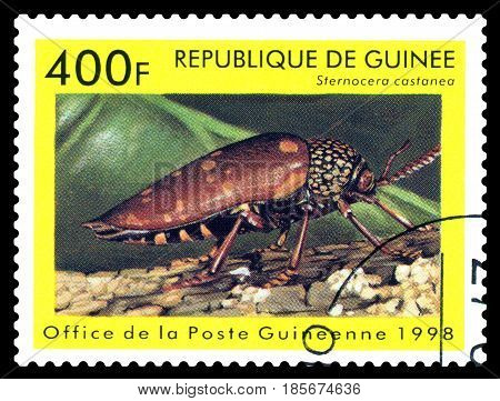STAVROPOL RUSSIA - April 30 2017: a stamp printed in Guinea (Republique de Guinee) shows Beetle Sternocera castanea series beetle circa 1998