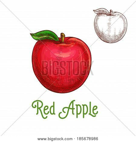 Apple fruit sketch. Vector isolated icon of fresh red apple with leaf. Sweet juicy whole plum fruit symbol for jam and juice product label or grocery store, shop and farm market design