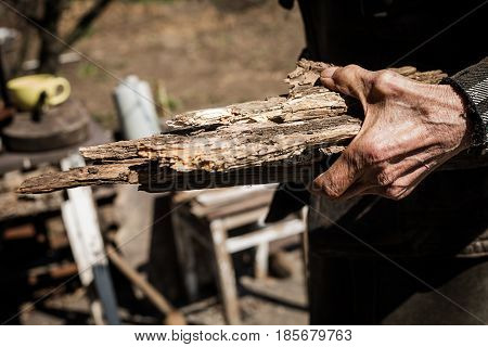 closeup of Old mans hand holding firewood