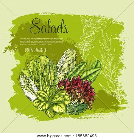 Salads and fresh lettuce or leafy veggies and vegetables harvest of oakleaf or corn salad, gotukola leaf and watercress with spinach, collard and swiss chard cabbage, arugula and chicory