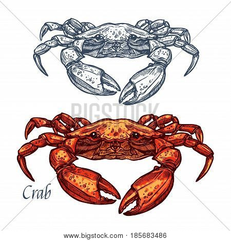 Crab sketch vector icon. Isolated ocean lobster crustaceans species. Isolated symbol for seafood restaurant sign or emblem, fishing club or fishery market